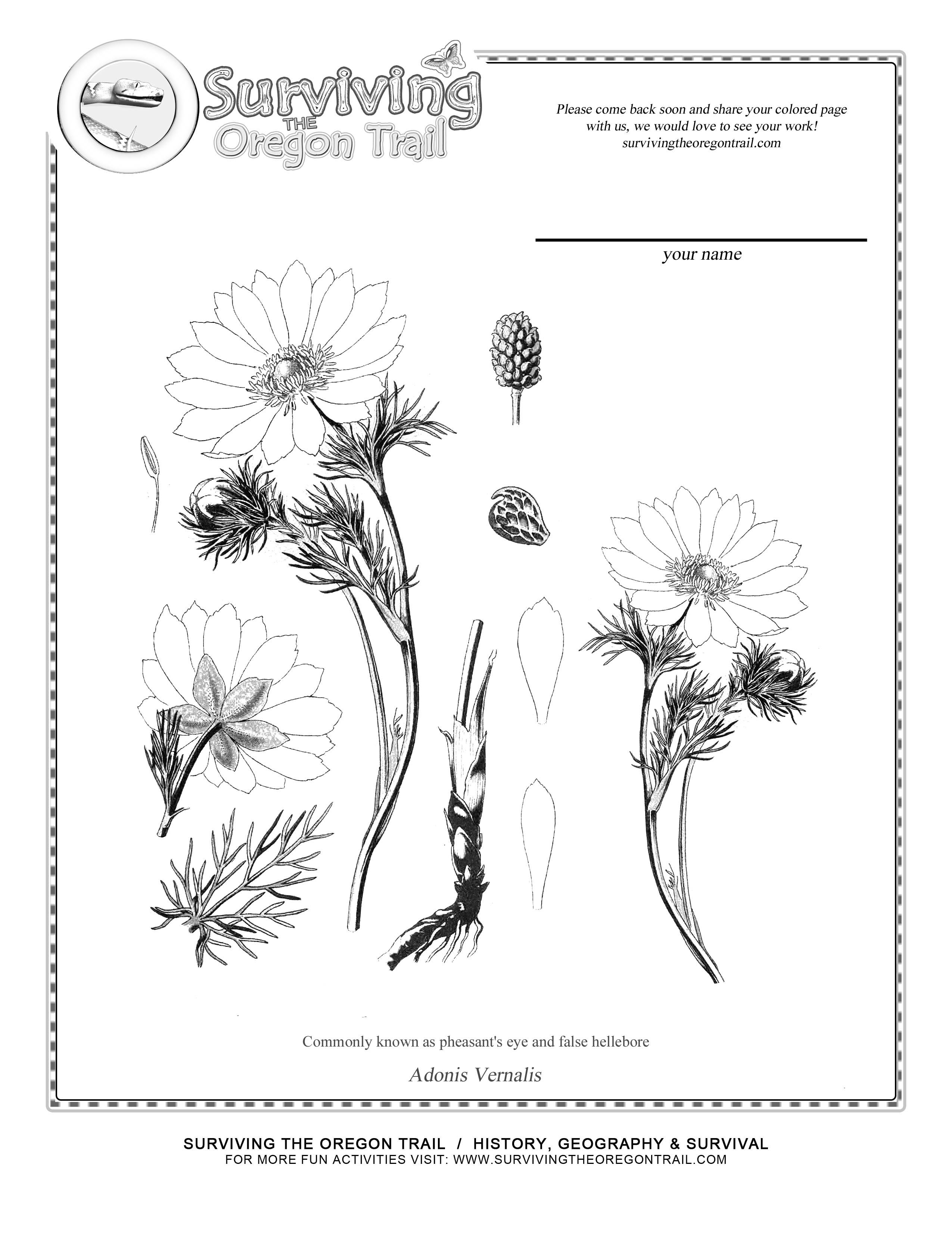 botany coloring pages - photo#17