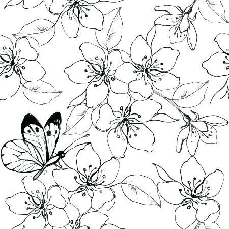 Cherry Blossoms Coloring Pages Coloring Home