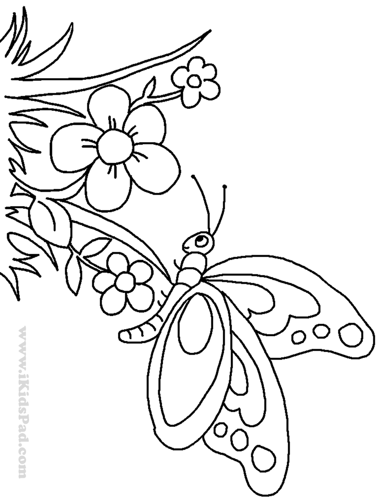 Cute Butterfly Coloring Pages For Adults - Coloring Home