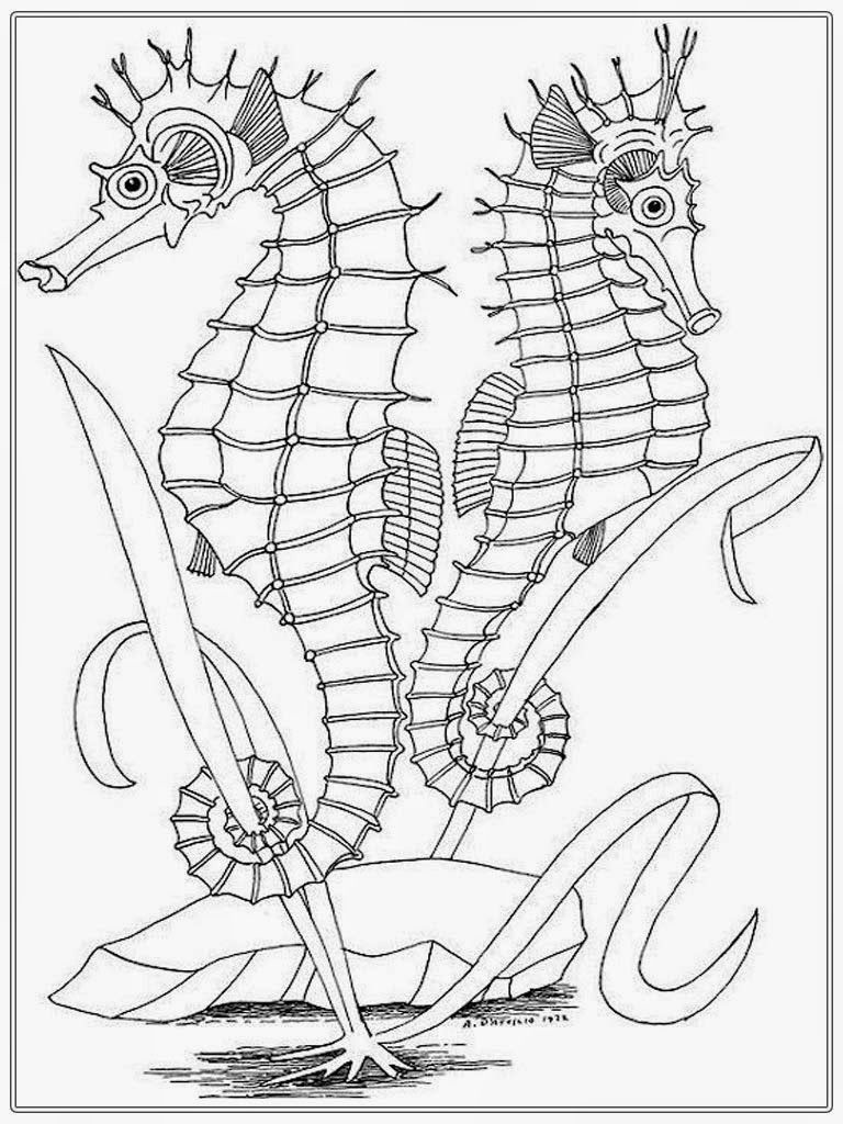 Realistic Seahorse Coloring Pages For Adult | Realistic Coloring Pages
