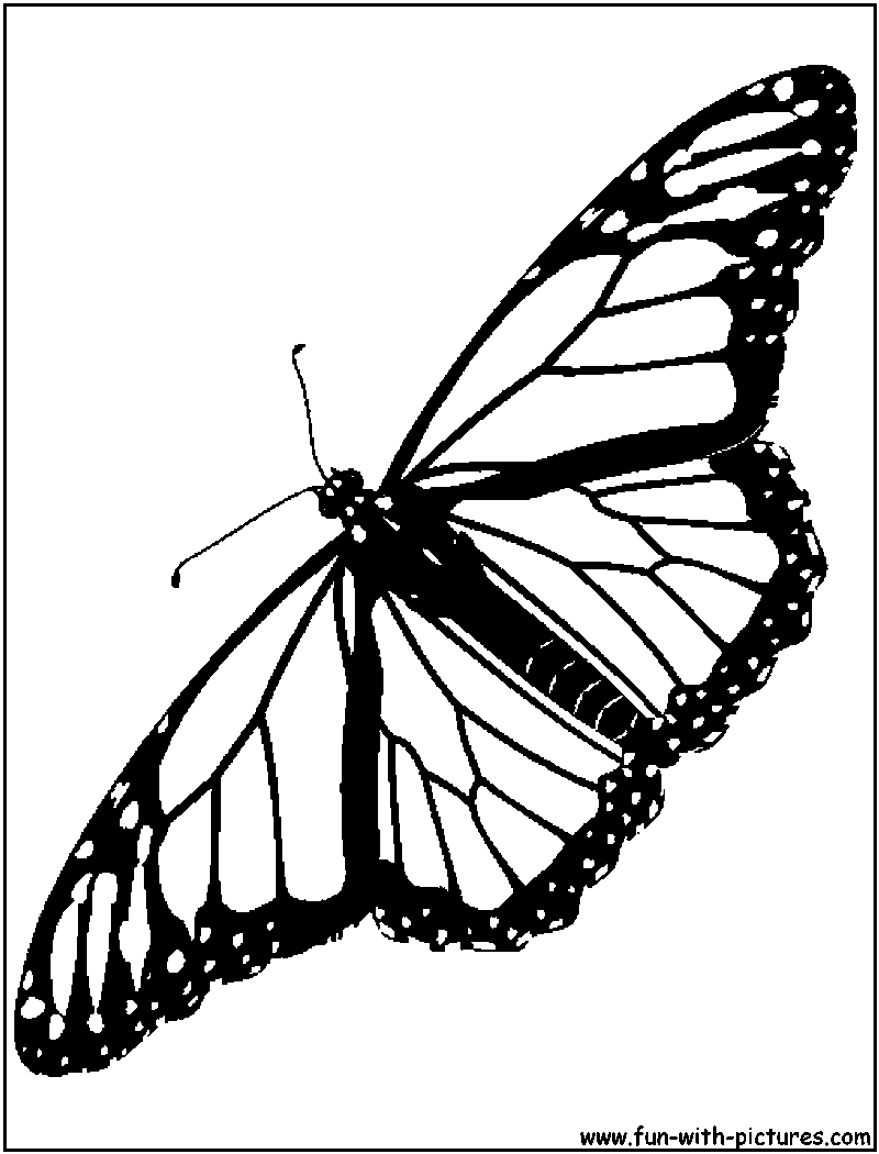 monarch butterfly coloring pages - monarch coloring page coloring home