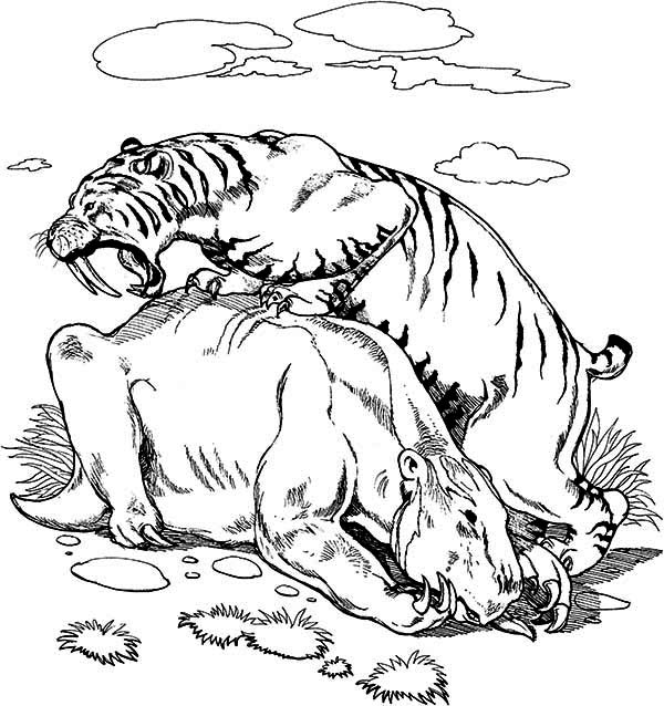 Sabre Tooth Tiger Coloring Page