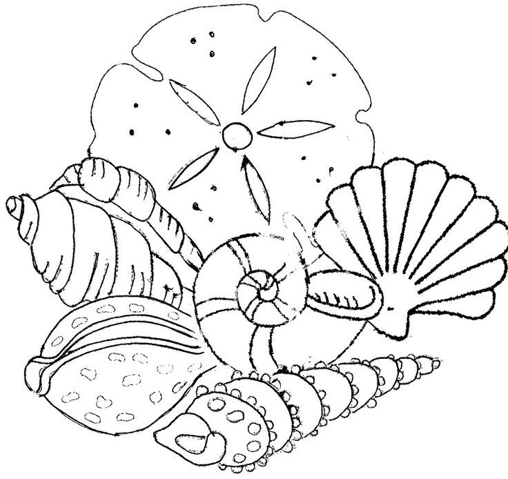 Beach Shells Coloring Pages - Coloring Home