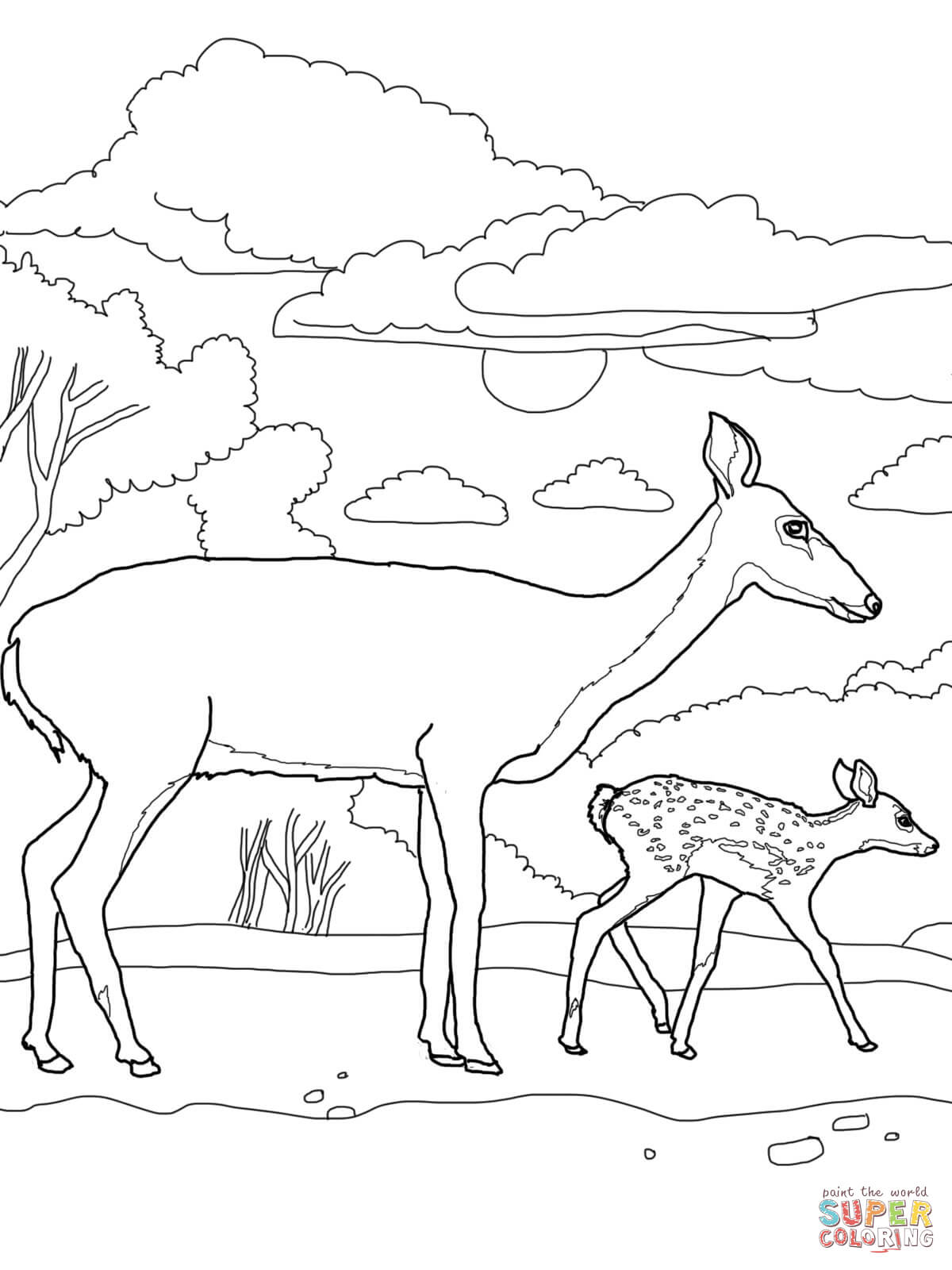 Baby Deer Coloring Page Coloring
