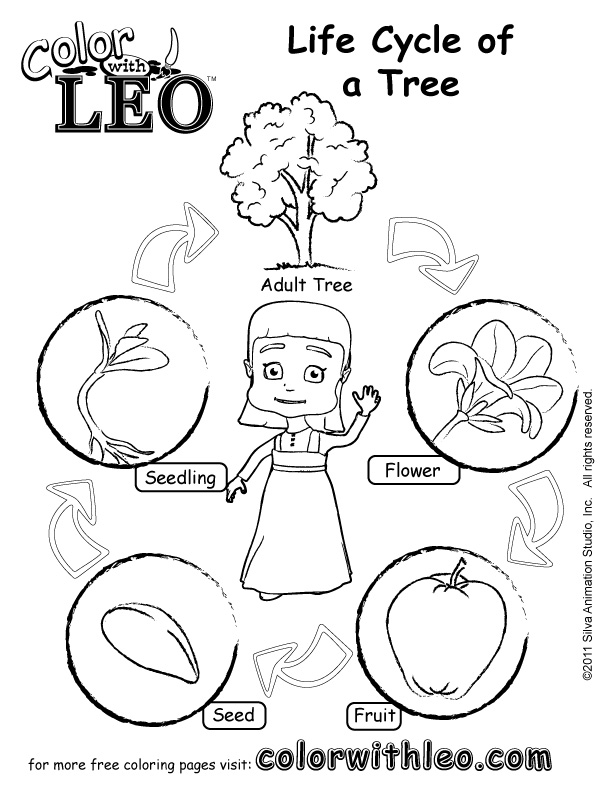 Plant Life Cycle Coloring Pages - AZ Coloring Pages