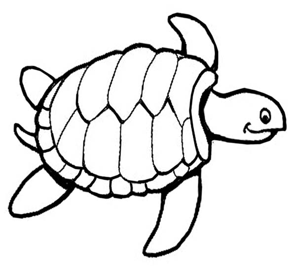 tutle coloring pages - photo#23