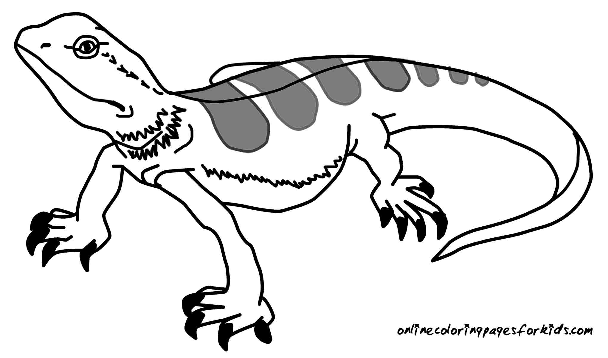 printable lizard coloring pages kids colorinenet 26748