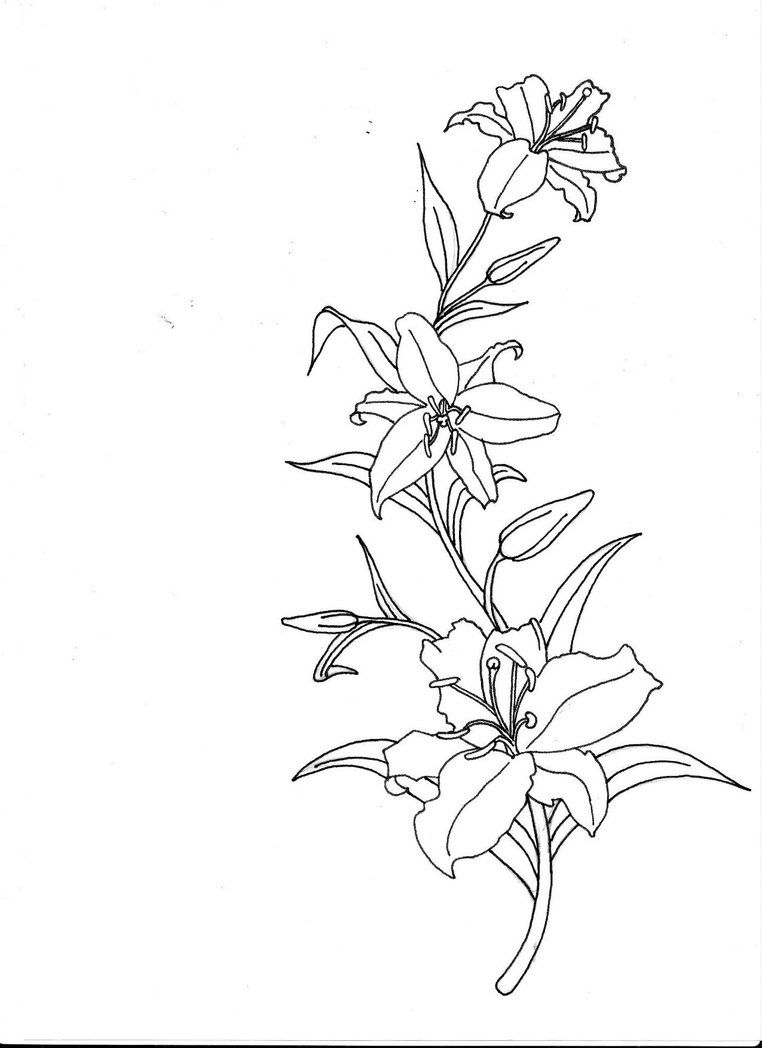 princess tiger lily coloring pages - photo#41