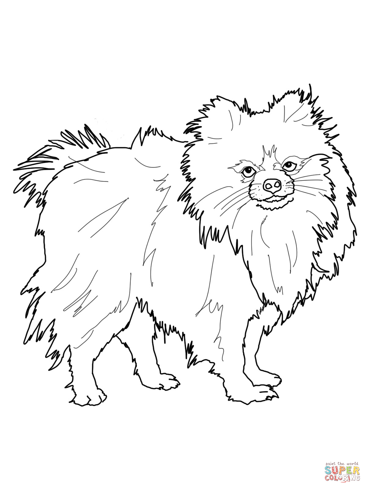 Boo The Pomeranian Coloring Pages Coloring Pages Pomeranian Coloring Pages