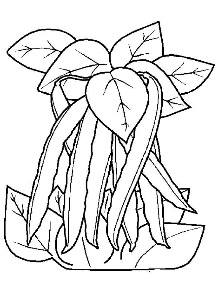 beans coloring pages - photo#8
