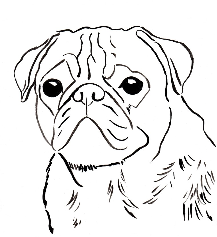 pug coloring pages - photo#10