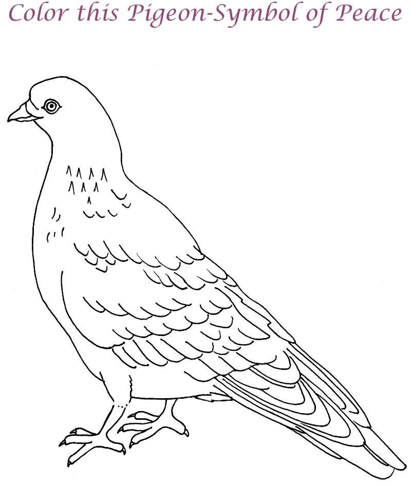 Cute coloring pages of pigeon coloring home for Coloring pages pigeon