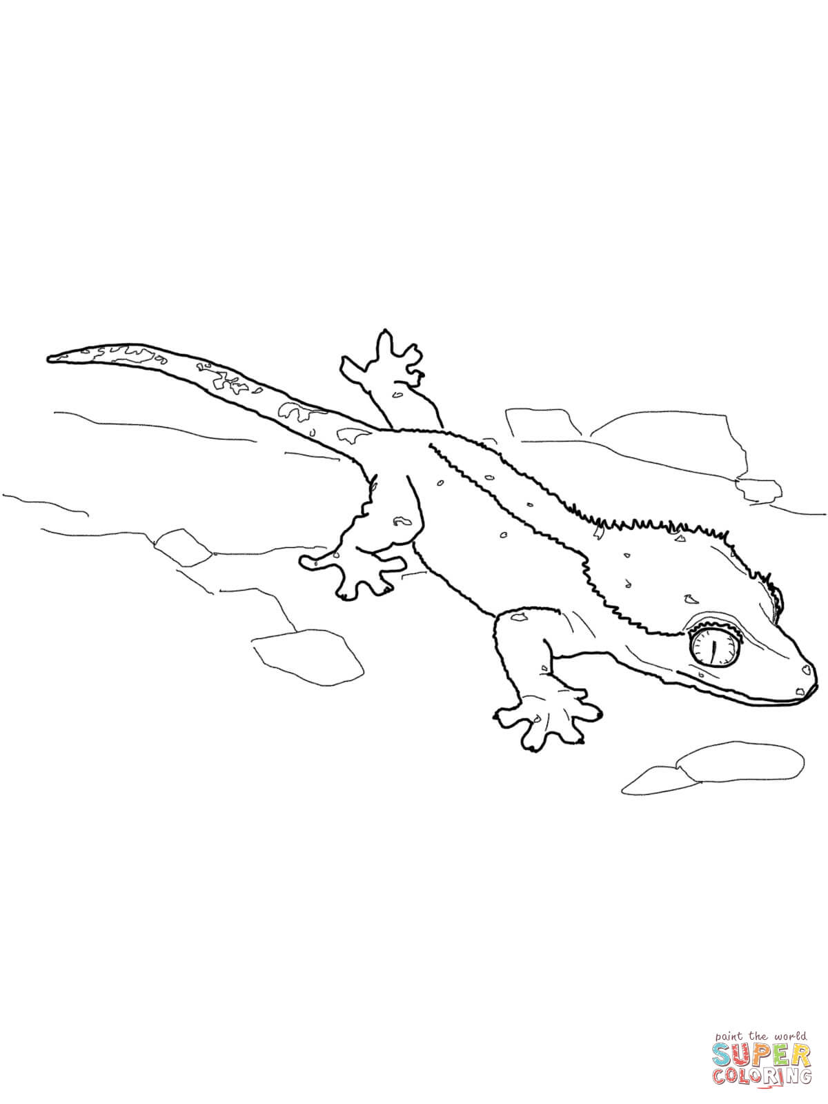 kaboose coloring pages printing gecko - photo #46
