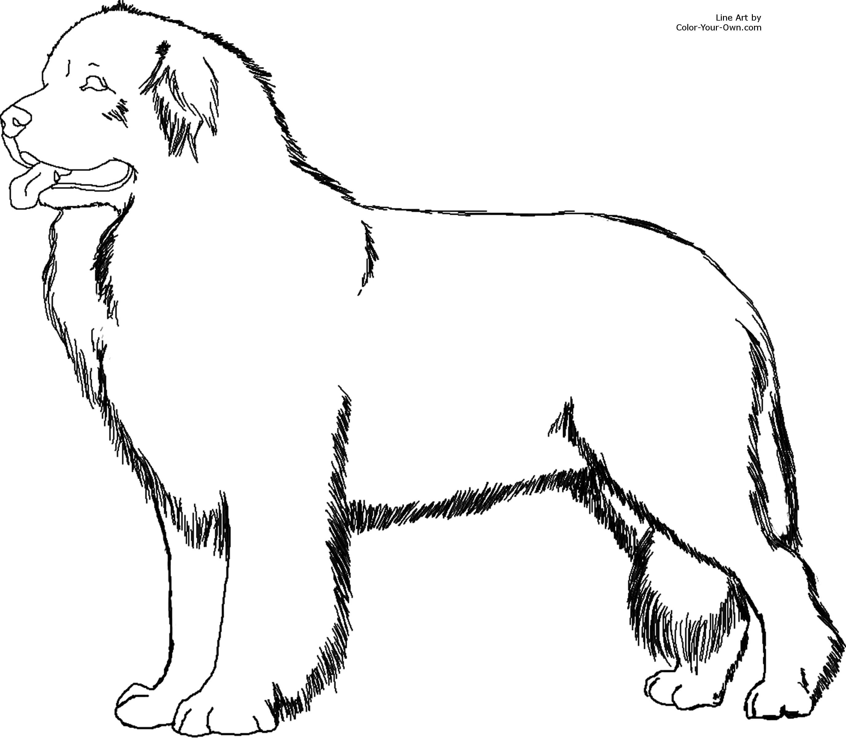 Coloring Pages Fluffy Dogs Coloring