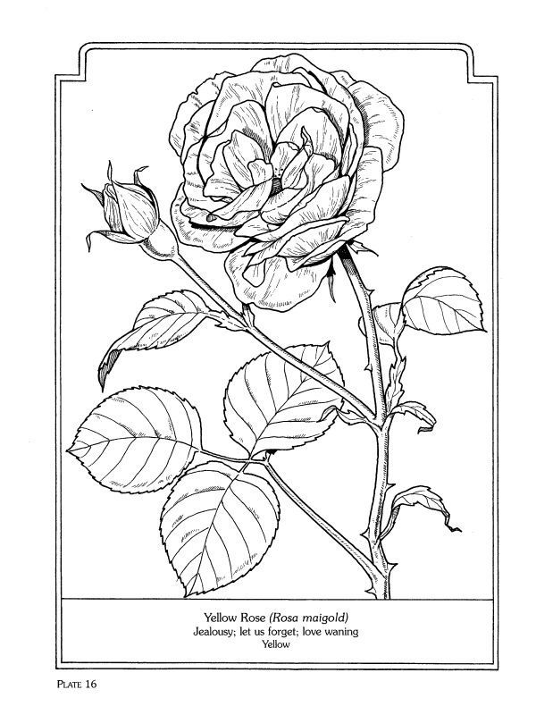 Botany Coloring Pages ...