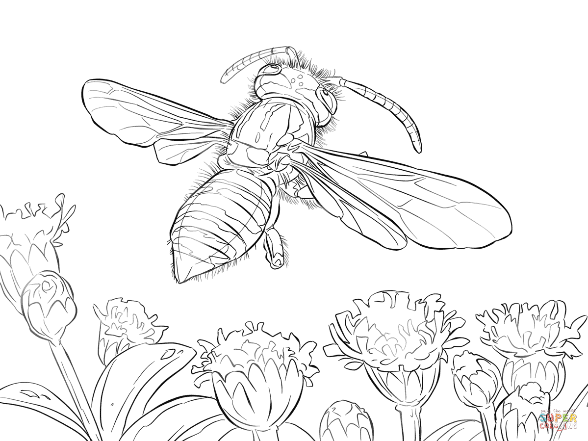Yellow Jacket Coloring Page - Coloring Home