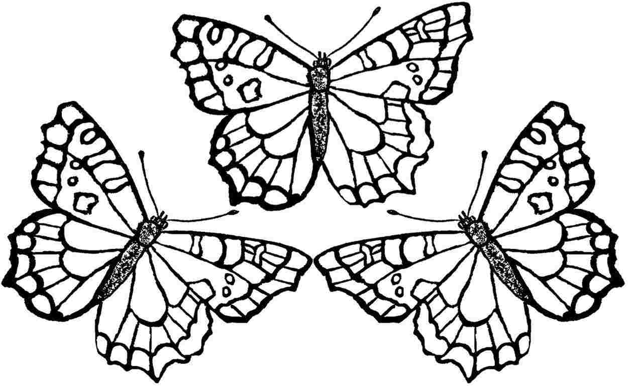 free butterfly coloring pages - photo#28
