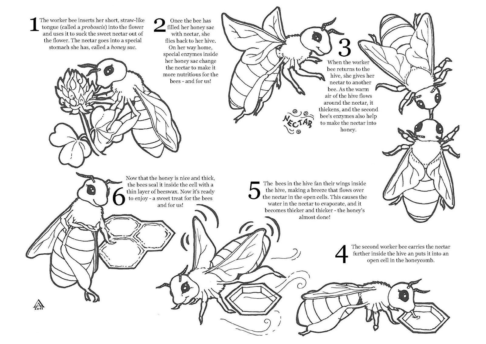 Honey Bee Coloring Pages (20 Pictures) - Colorine.net ...