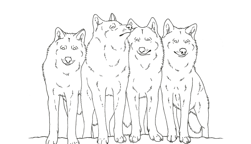 Wolf Pack Coloring Pages Coloring