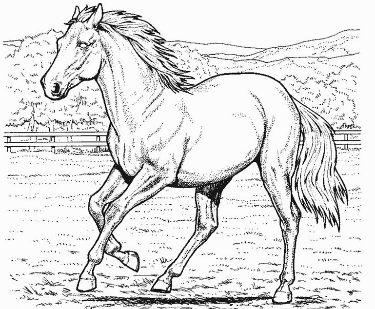 - Free Printable Realistic Horse Coloring Page - Coloring Home