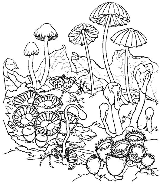 trippy coloring pages mushrooms types - photo#7