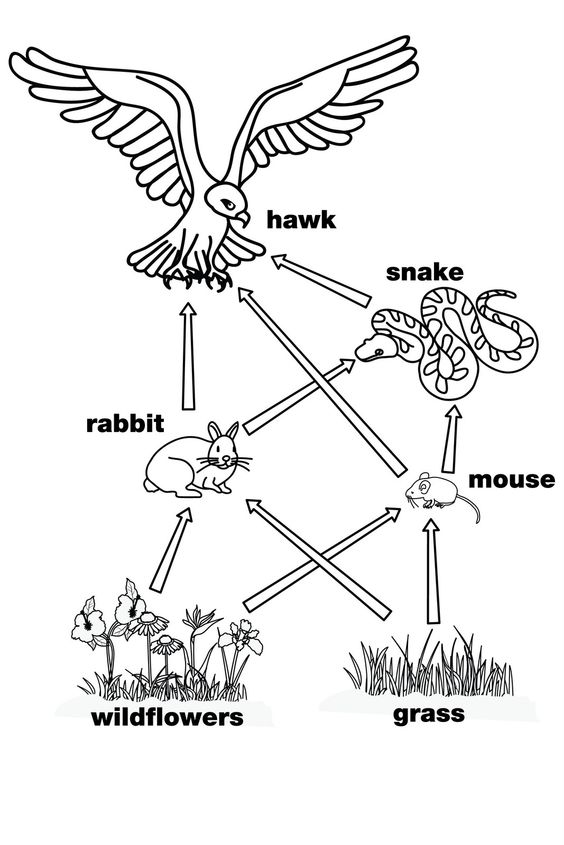 Food Chain Coloring Page Coloring Home