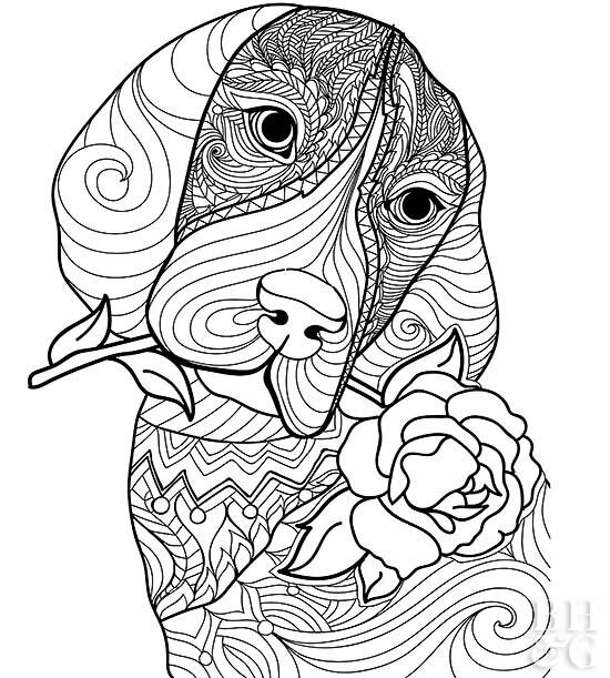 24 Free Pet Coloring Pages | Better Homes & Gardens