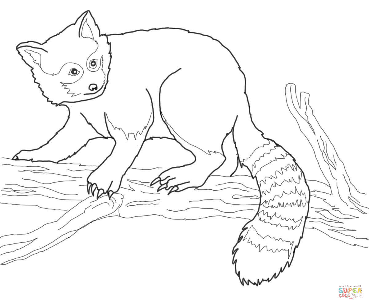 Red panda coloring pages | Free Coloring Pages
