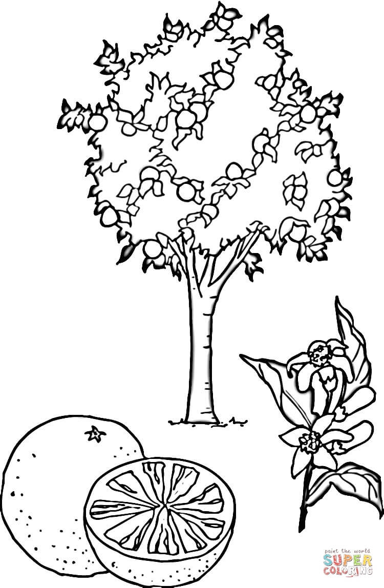 Orange Tree Coloring Page Free Printable Coloring Pages
