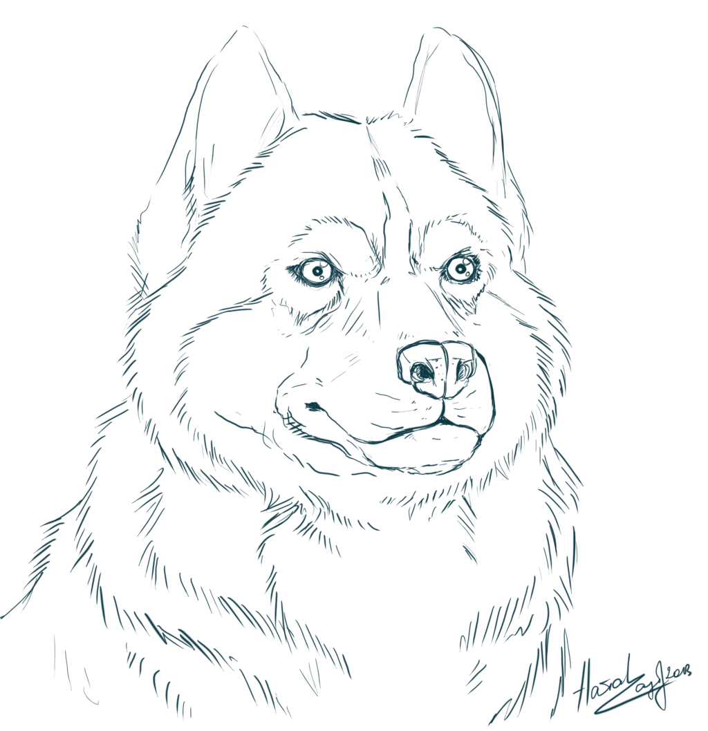 Husky Coloring Page - Coloring Home