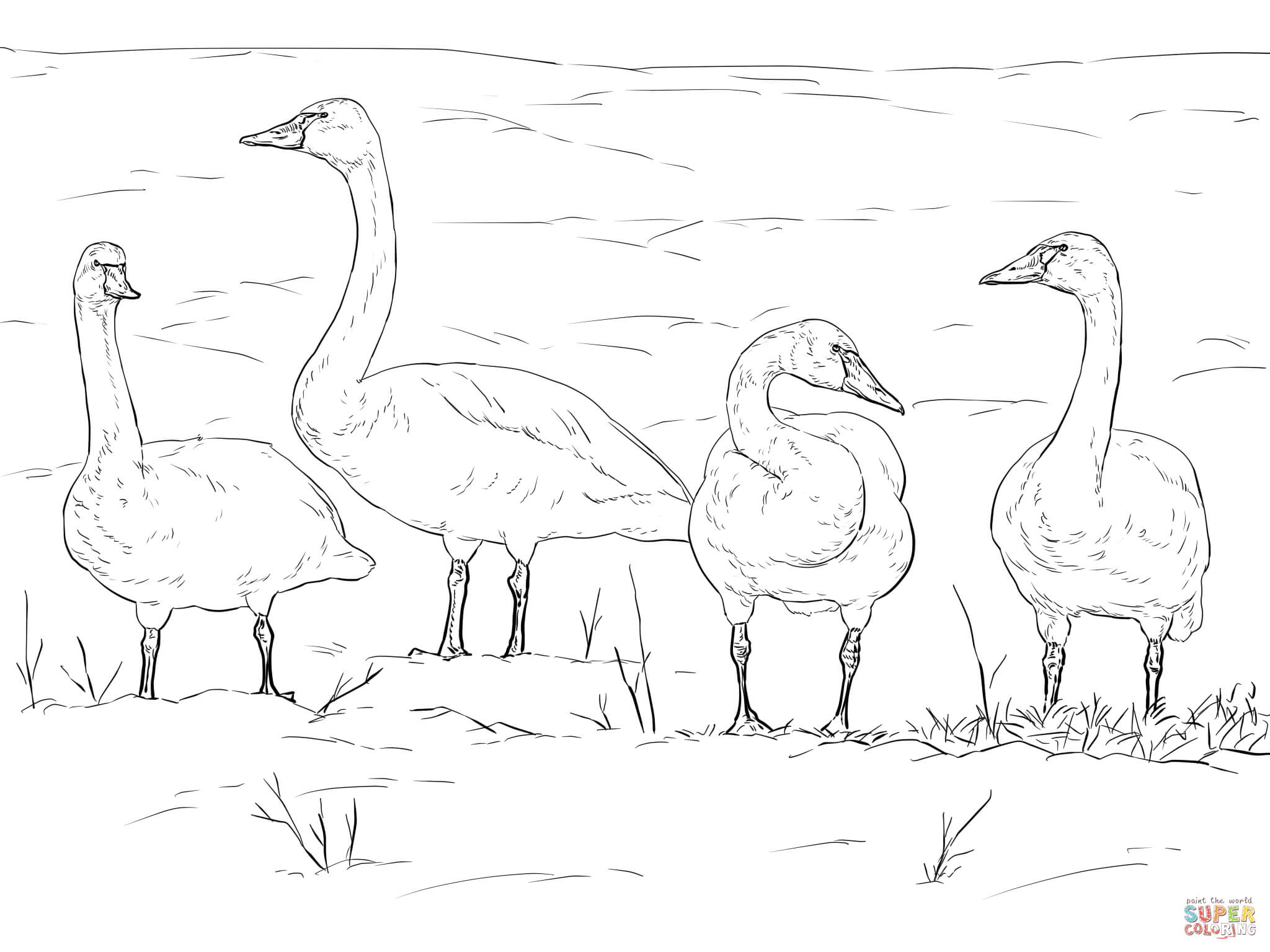 free swan lake coloring pages - photo#29
