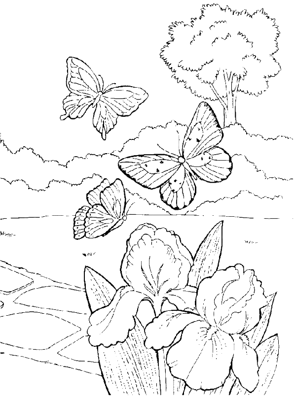 iris coloring pages - photo#36