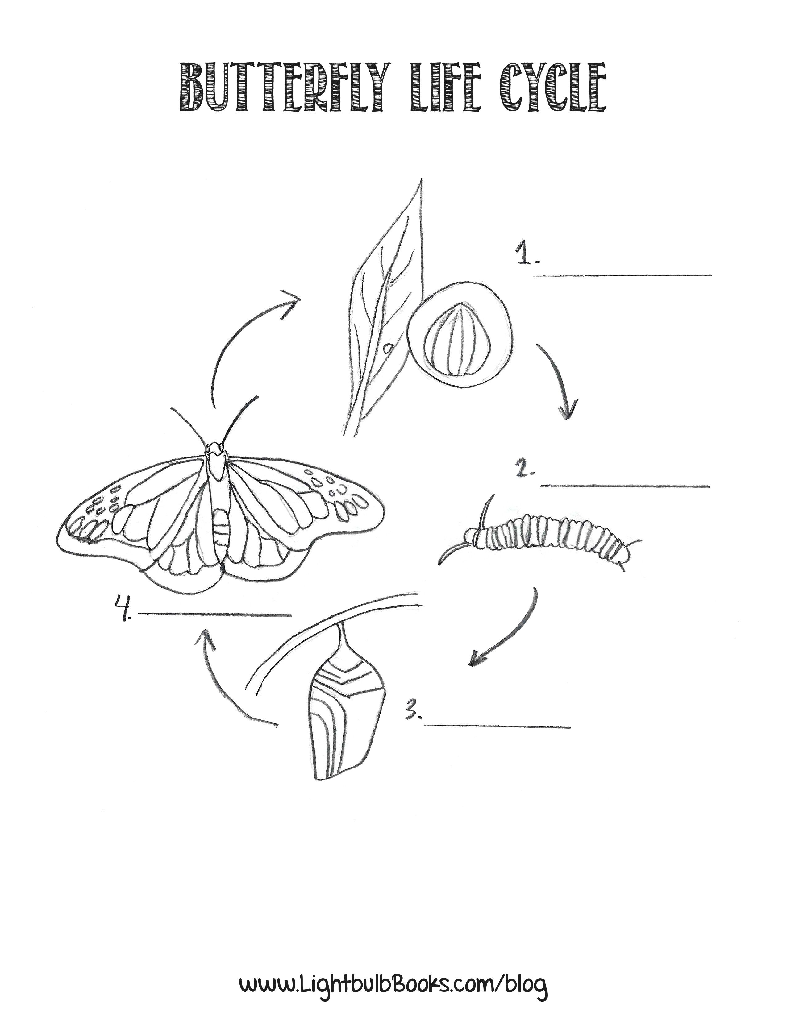 Butterfly stages coloring pages - 10 Pics Of Sunflower Life Cycle Coloring Page Coloring Pages