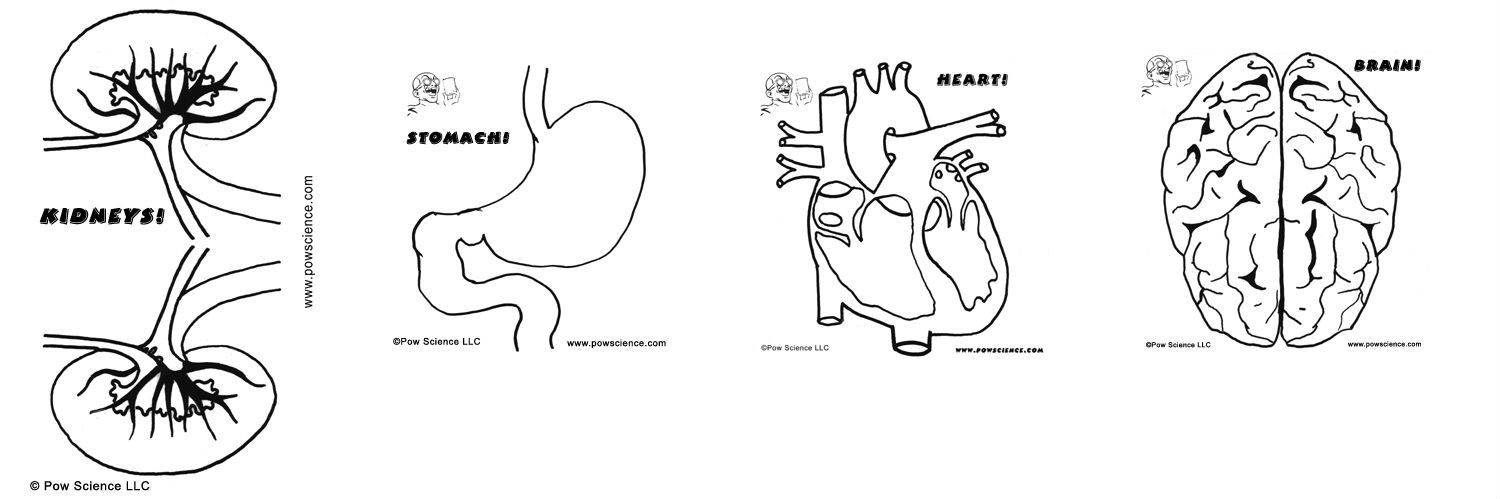 human organ systems coloring pages - photo#11