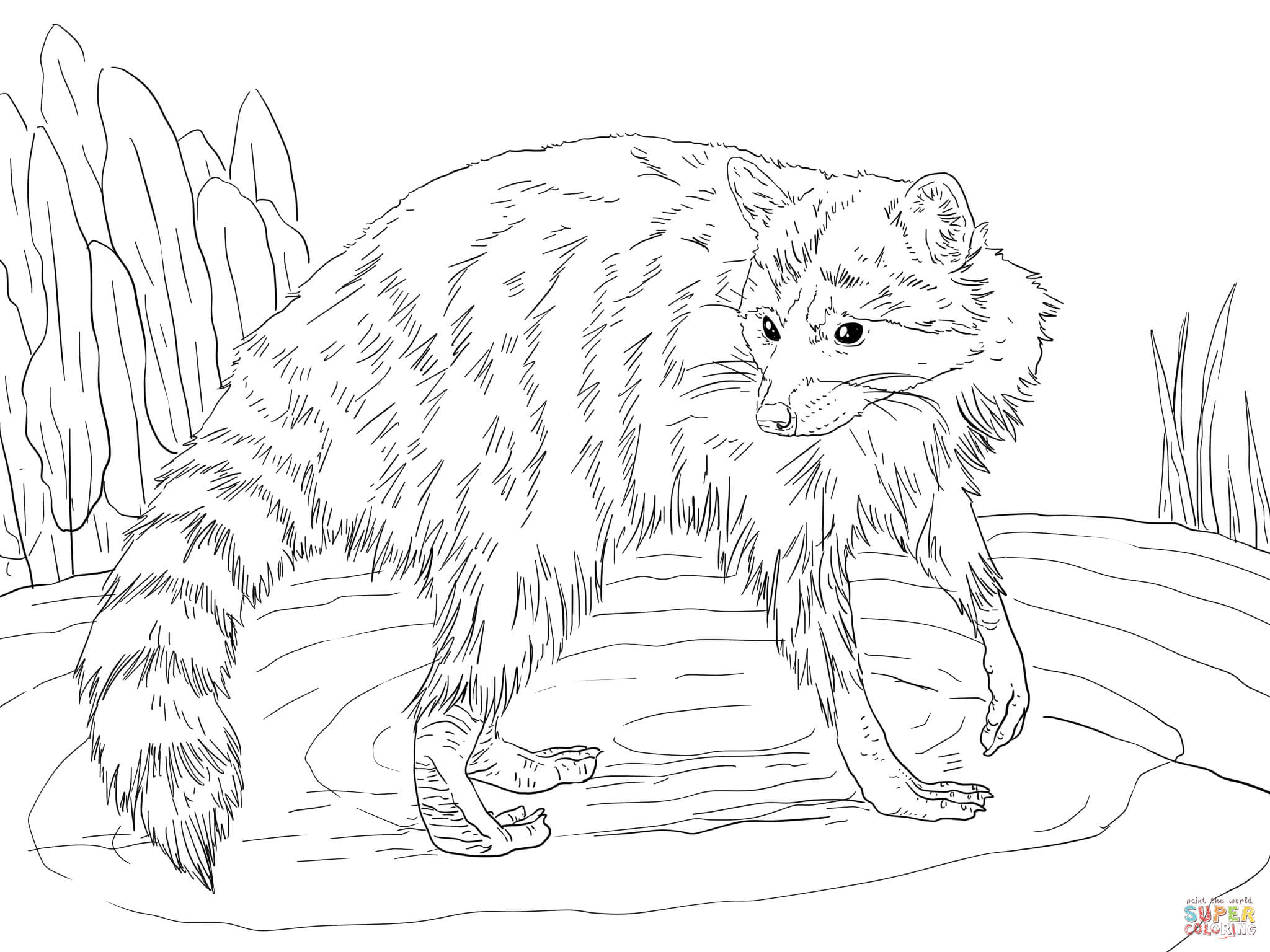 North American Raccoon coloring page | Free Printable Coloring Pages | 1536x2048