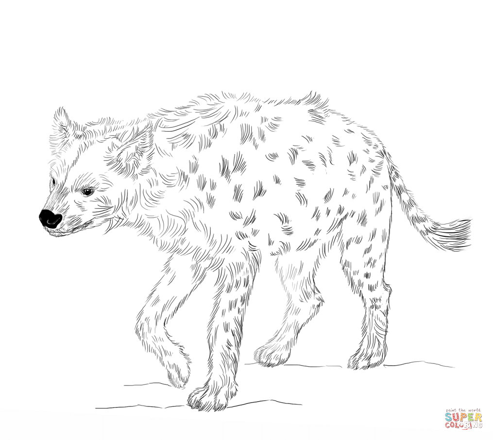 Laughing Hyena Coloring Pages Coloring Home Hyena Coloring Pages