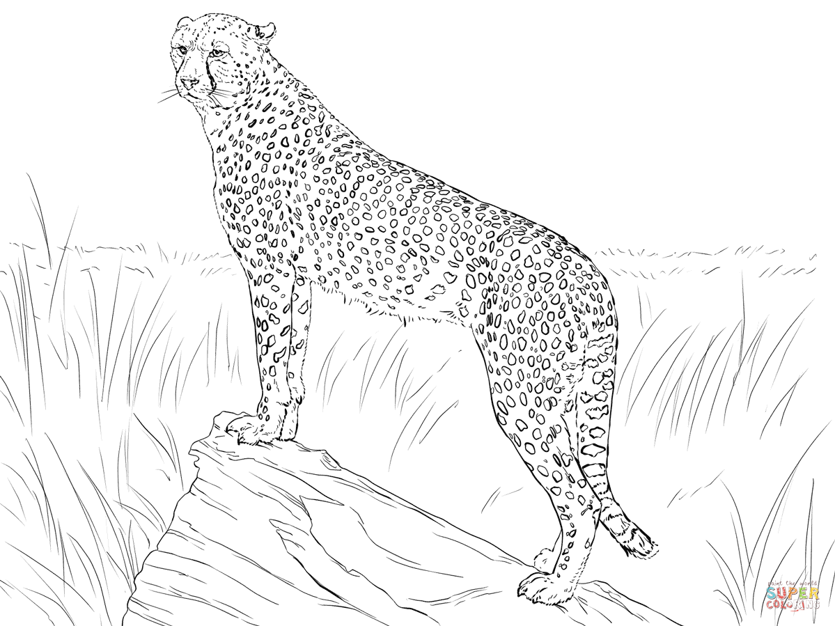chettah girls coloring pages - photo#21