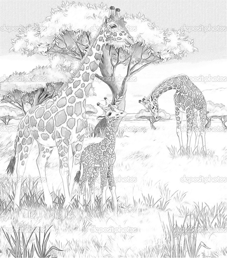 Adult Coloring Pages Safari