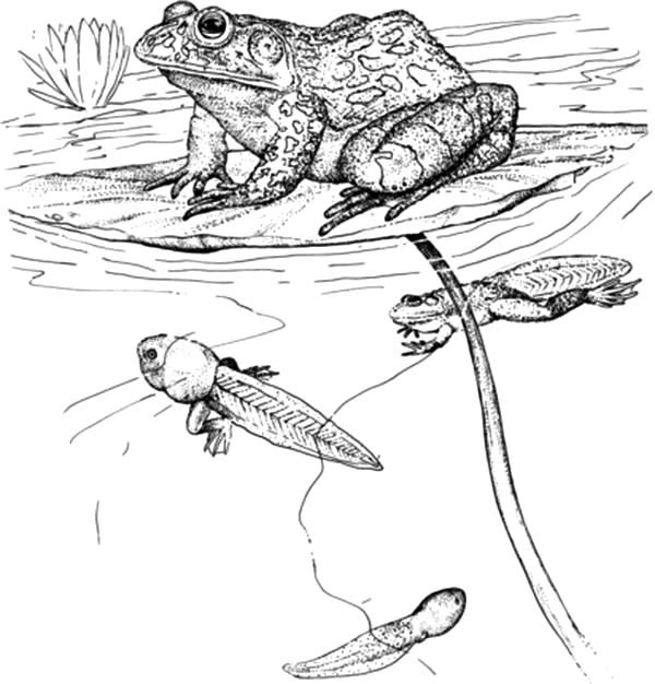 tadpole coloring pages - photo #22