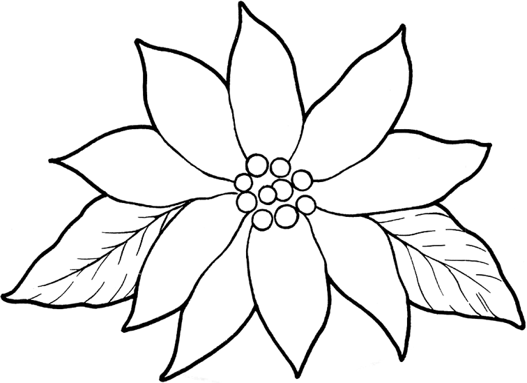 pointsettas coloring pages - photo#9