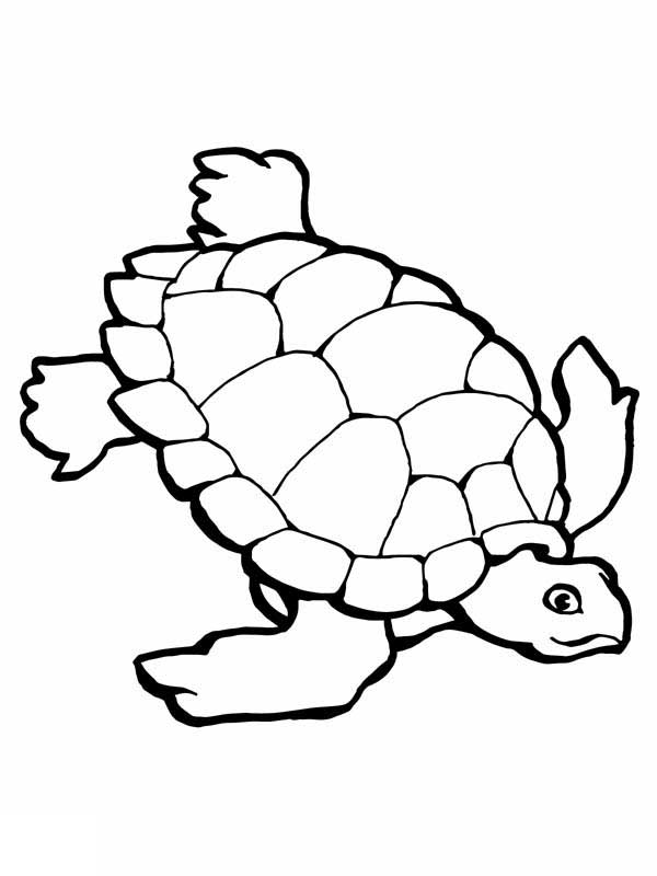 Coloring Pages Sea Turtle Printables - AZ Coloring Pages