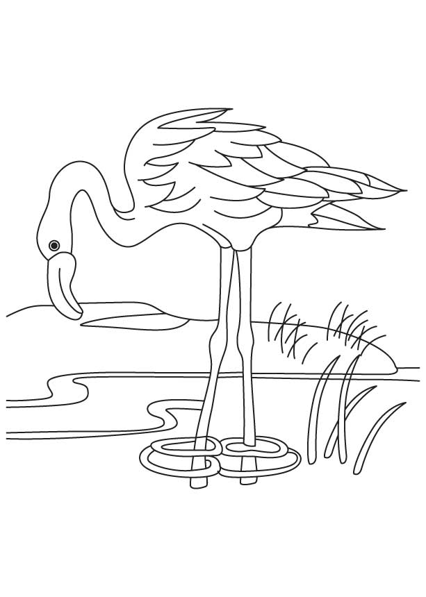 Flamingo Coloring Page - Coloring Home
