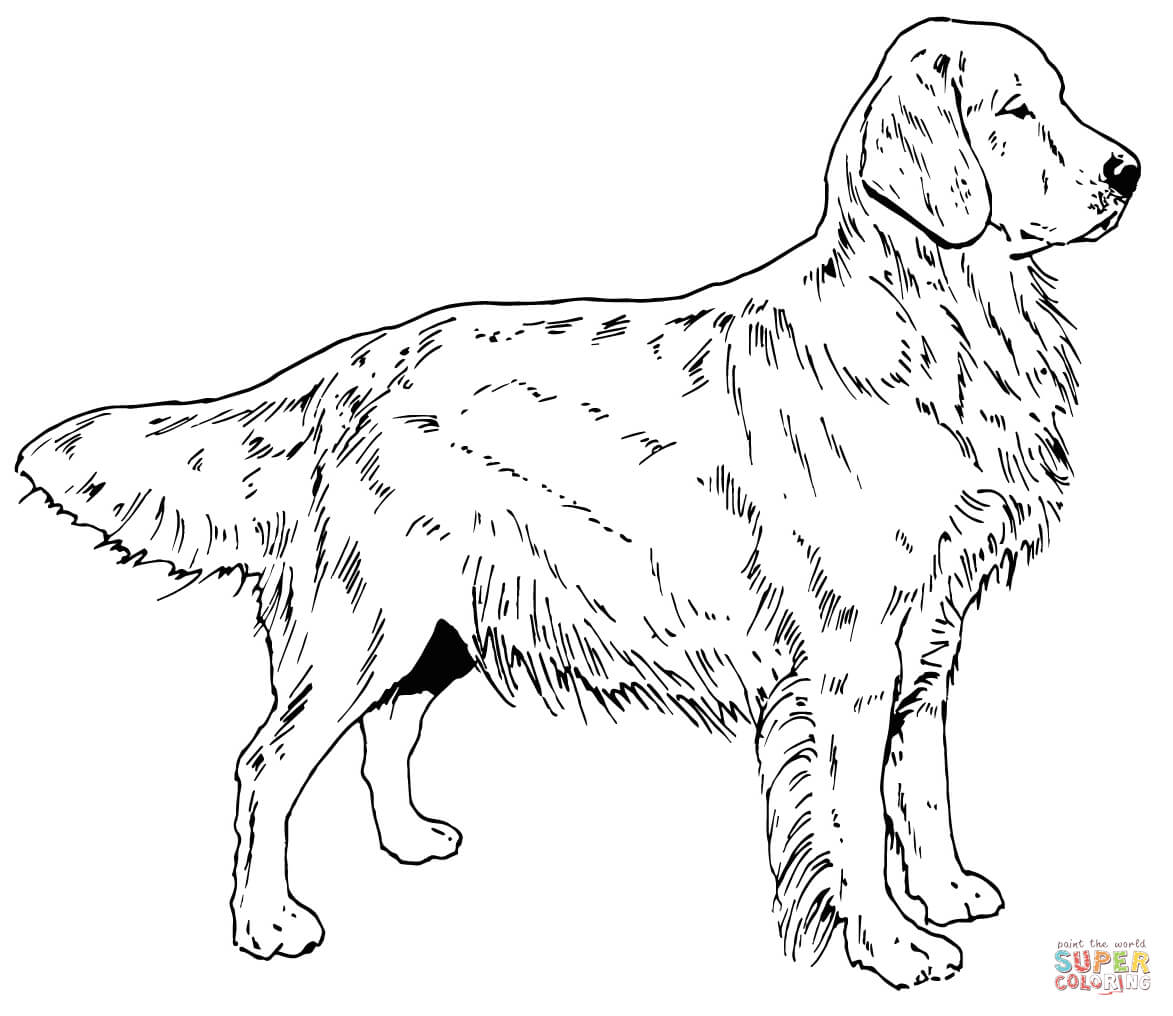Golden Retriever Puppy coloring page | Free Printable Coloring Pages