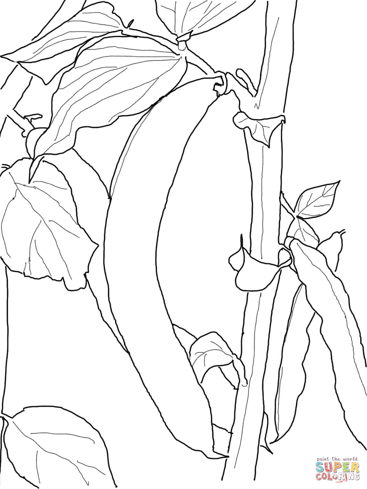 beans coloring pages - photo#15