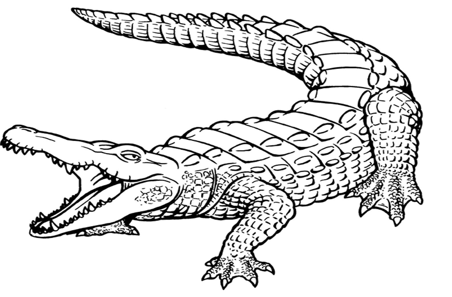 Crocodiles Coloring Pages Coloring Home