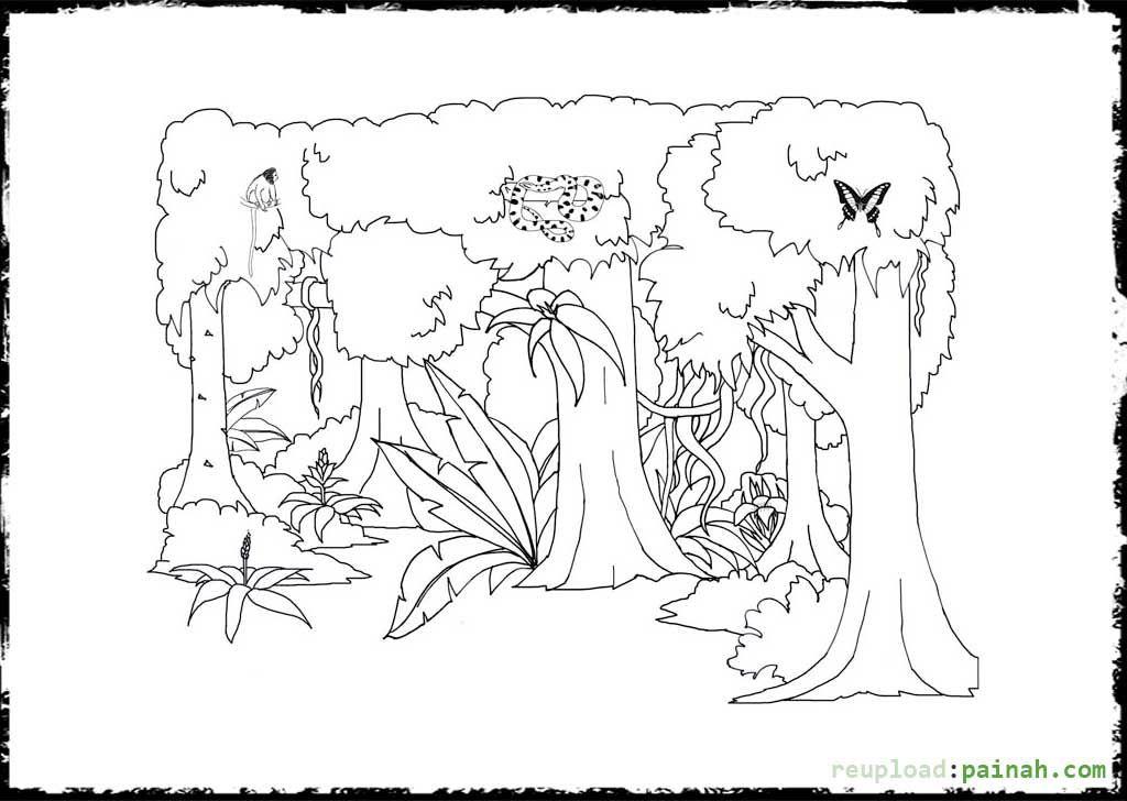 Tropical Rainforest Plants Printables