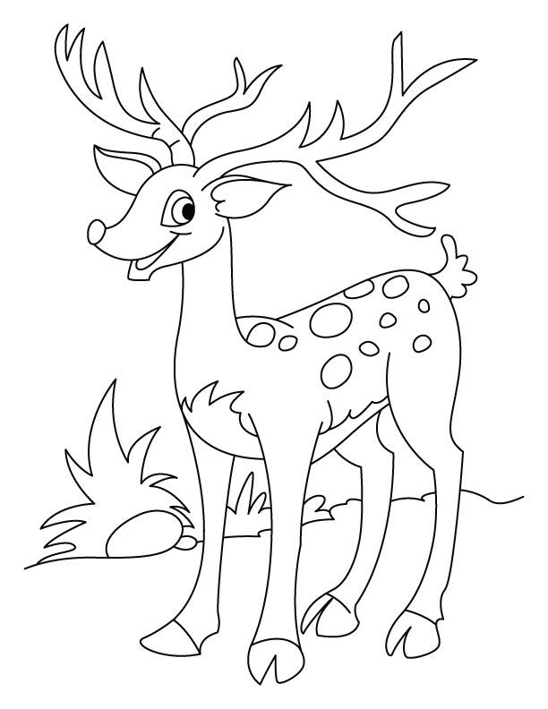 Coloring pages for kids deer az coloring pages for Deer coloring pages for adults
