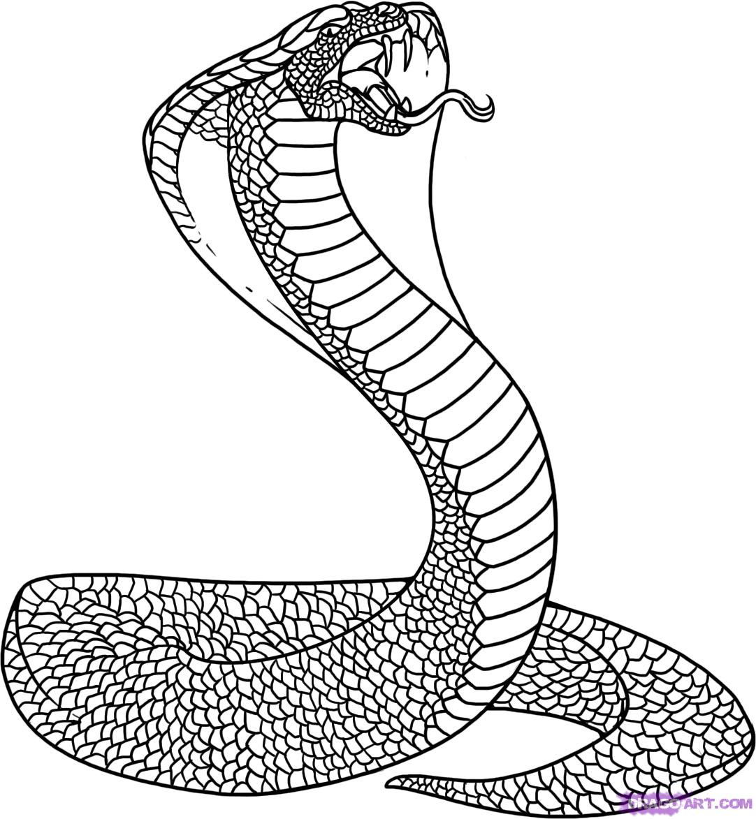 Free Cobra Drawing, Download Free Clip Art, Free Clip Art on Clipart Library
