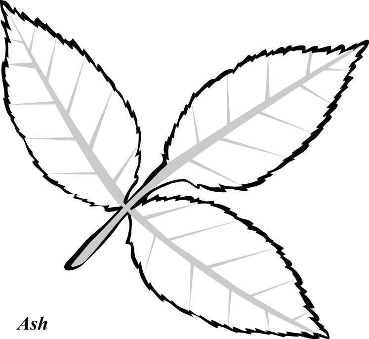 Line Drawing Leaf : Line drawings of leaves coloring home
