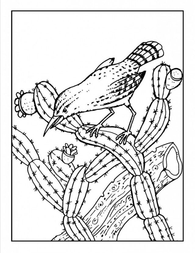 coloring pages for saugaros - photo#2